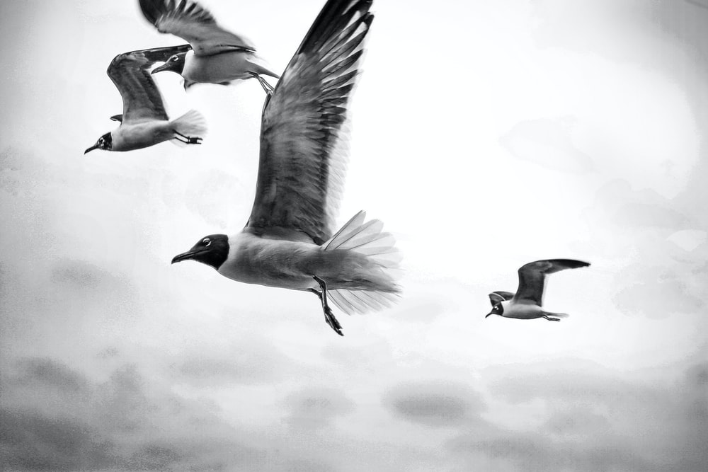 grayscale photography of four flying birds