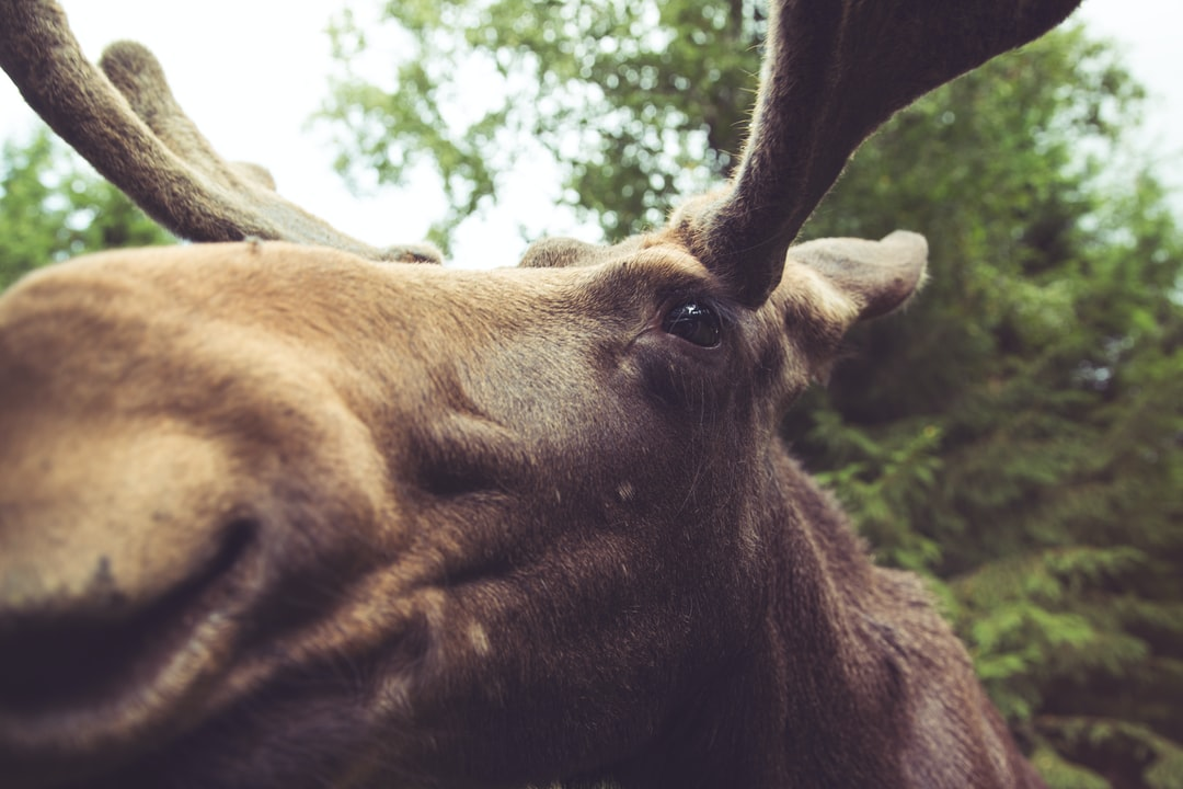 macro photography of brown moose
