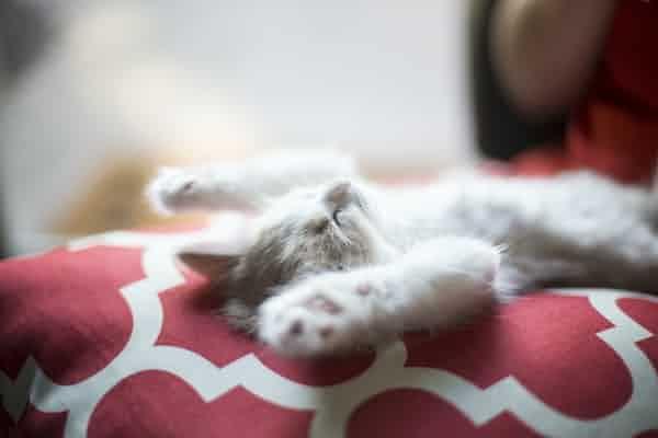 הפרעות שינה - איך מזהים אותן ולמה כל-כך חשוב לטפל בהן