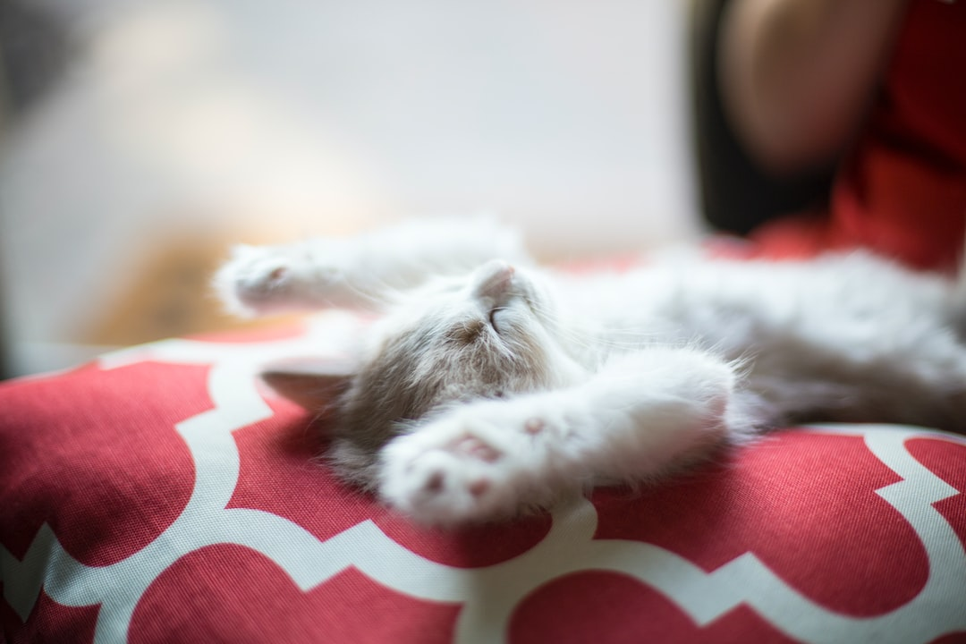 This is Chip — Chip likes to sleep. We recently got two adorable 6 week old kittens and they absolutely love to wrestle, play and, of course, nap. This photo perfectly captures this young cat's chill personality and encourages us all to take a moment to relax.