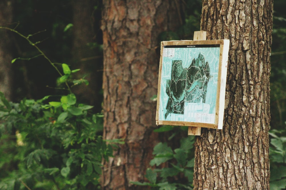 green and black abstract painting with brown wooden frame on tree