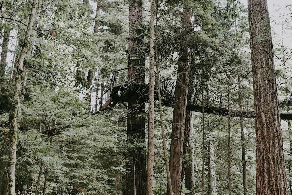 Treetop Trek, Windermere