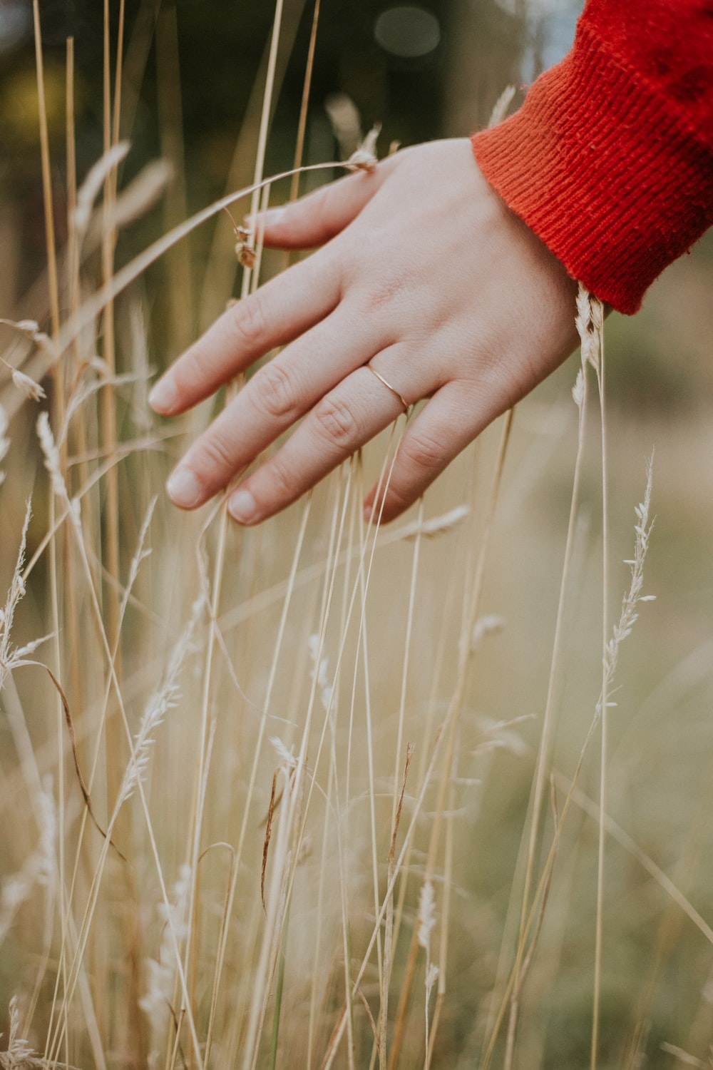 person holding beige grass during daytime