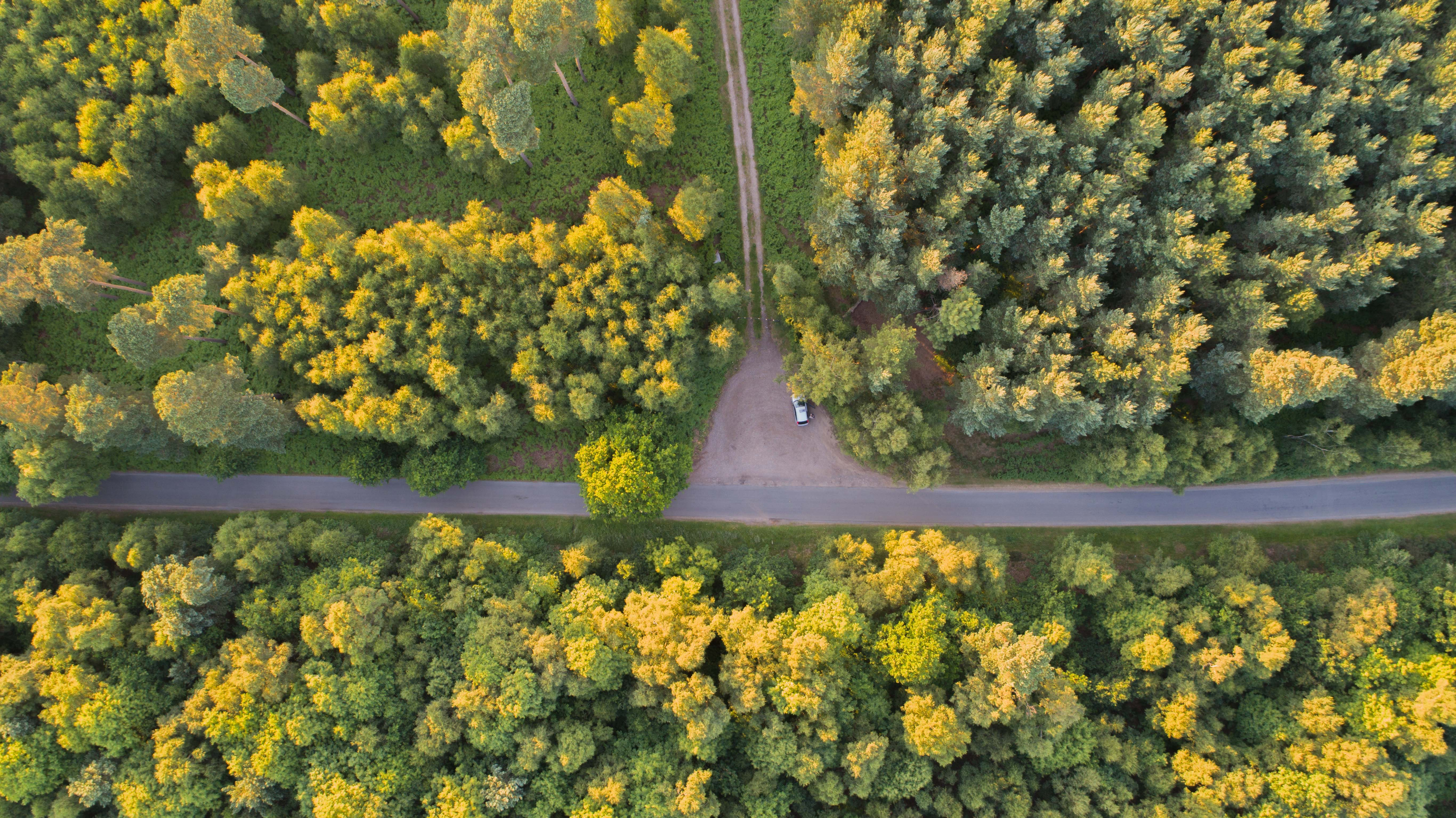 Drone aerial view of a right angle intersection of the dirt road with the main road in Tunstall Forest.