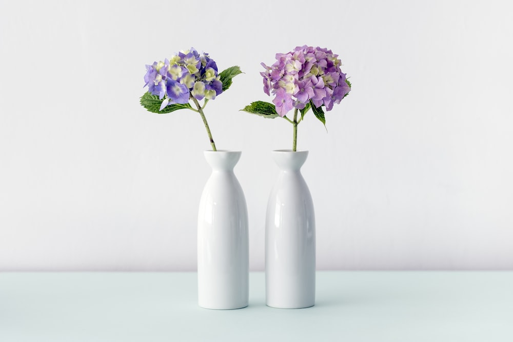 Violet and pink hydrangea flowers in two white vases