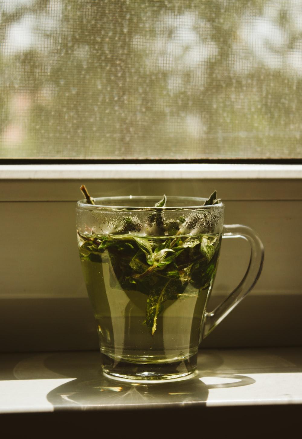 green leaf in clear glass mug
