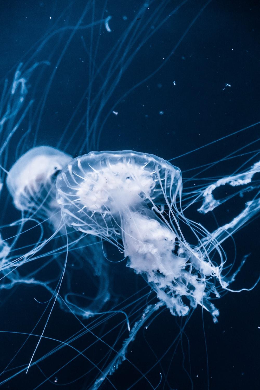 jellyfishes underwater