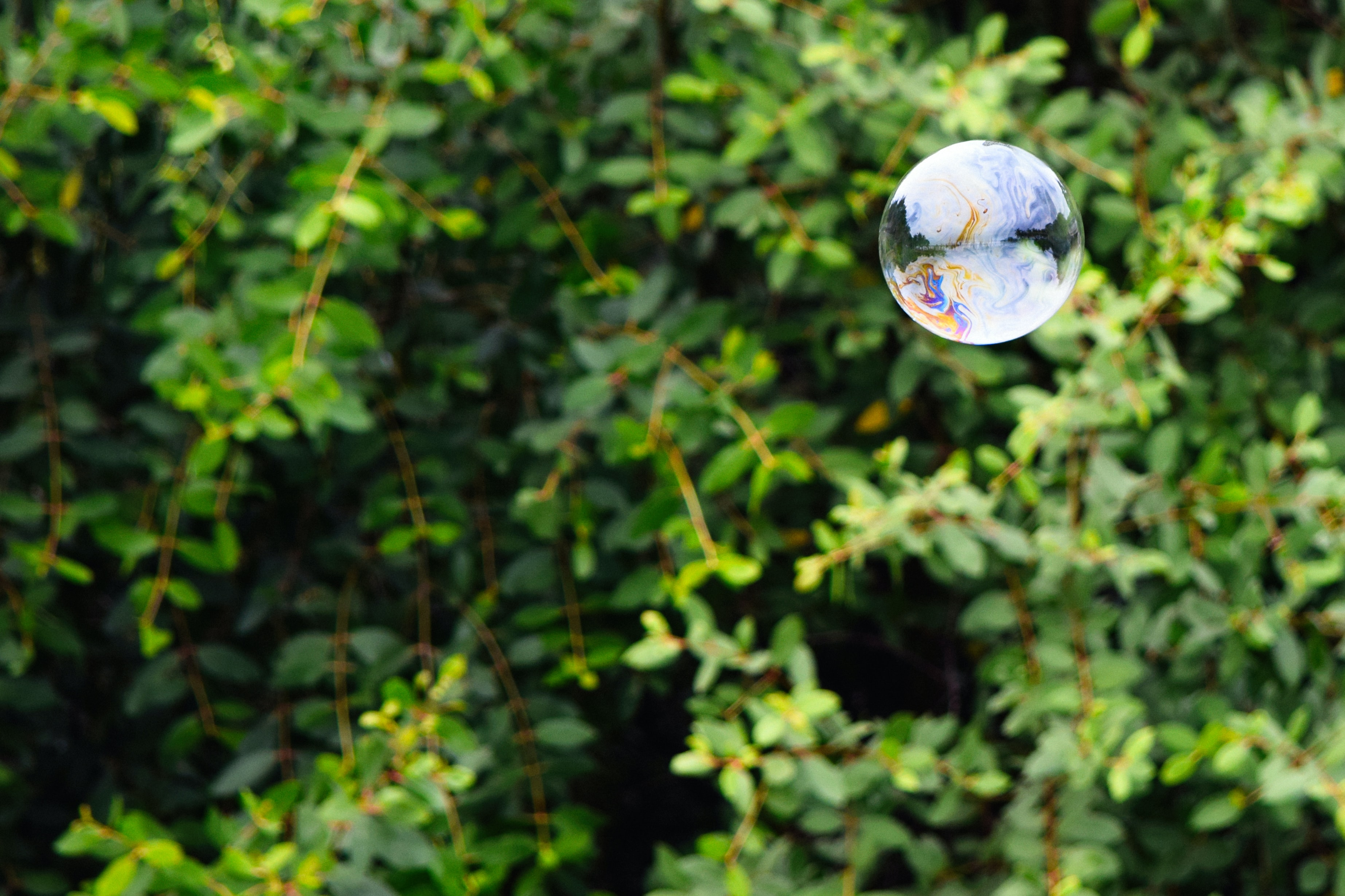 A spherical soap bubble floats in the air near leaves