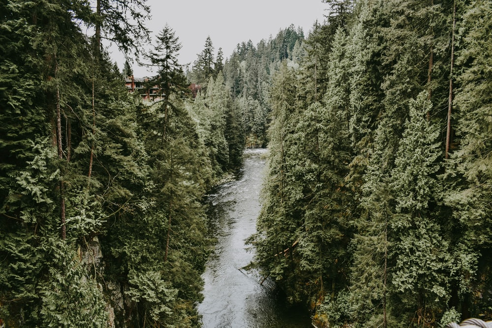 river between green leafed trees