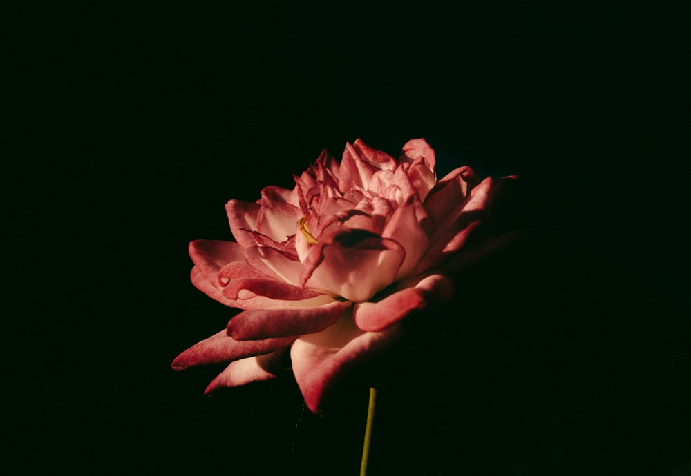 red flower in middle of dark