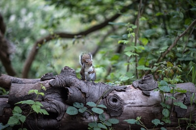 brown and white squirrel on brown tree trunk