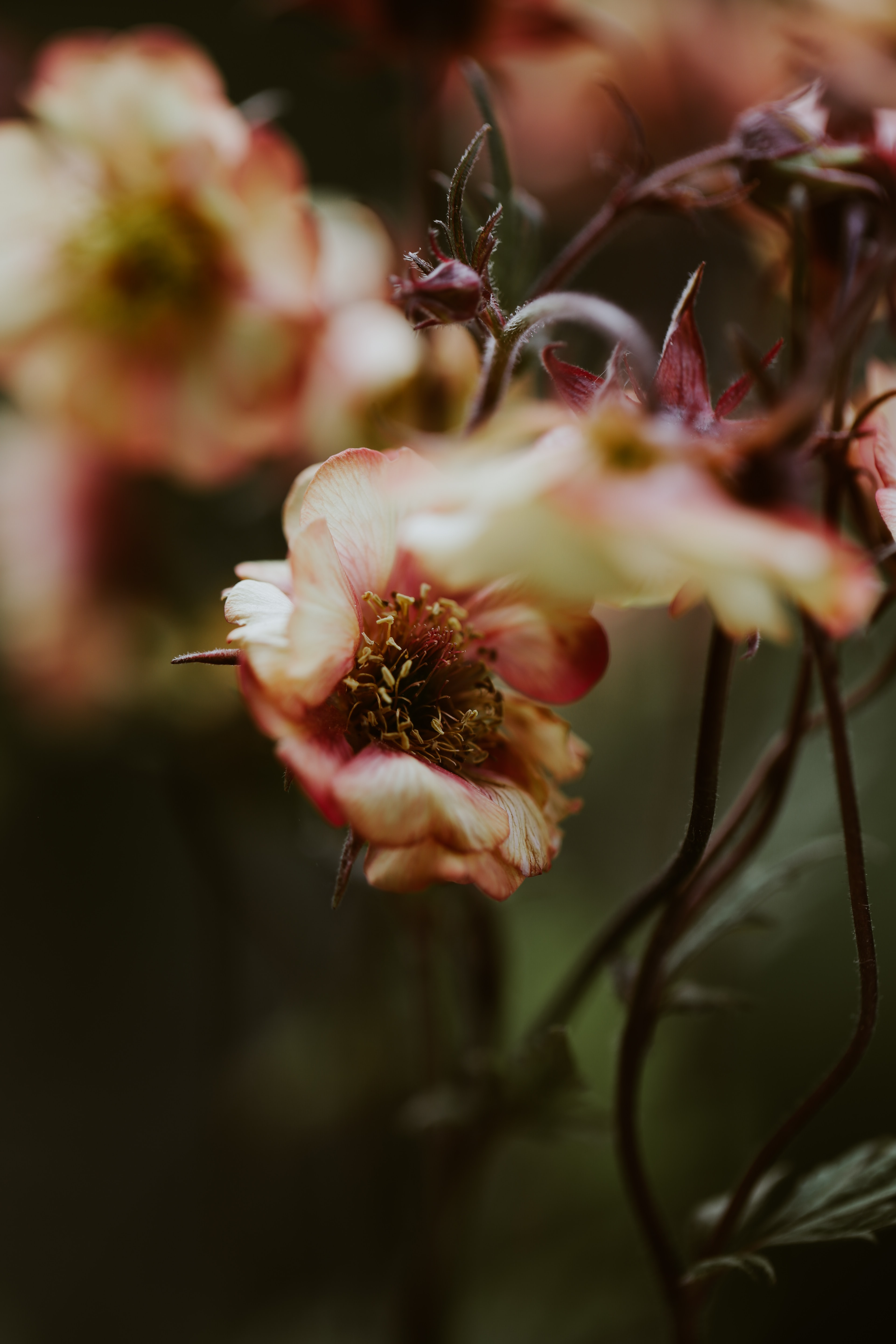 red and white petaled flowers in selective focus photography