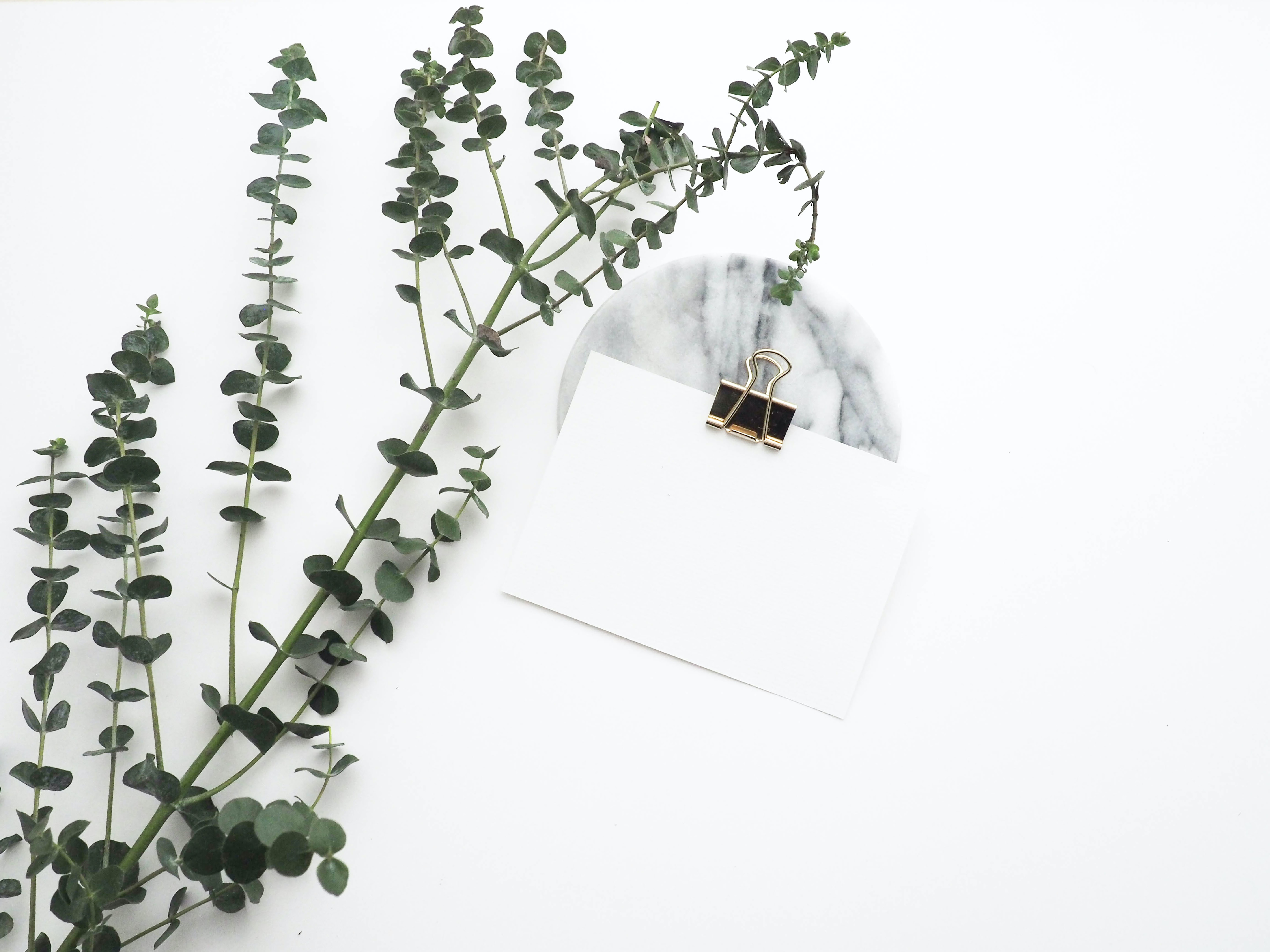 A Eucalyptus plant, a blank sheet of paper with a brass clip on it, and a marble slab against a white background