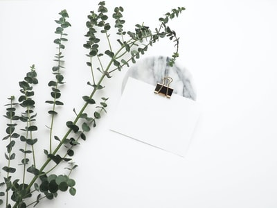 white card with paper clip near plant lay zoom background