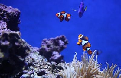 Just Nemo Dory & Marlin having fun