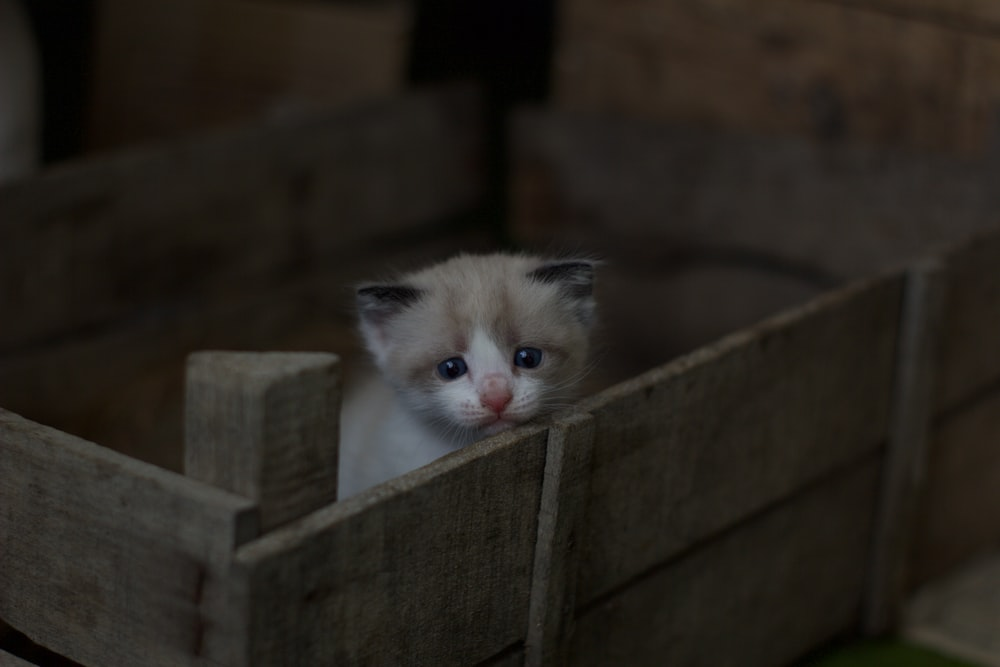 white and gray tabby kitten on brown wooden crate