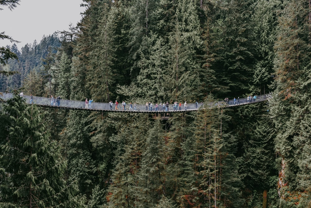 people on hanging bridge surrounded by tall trees