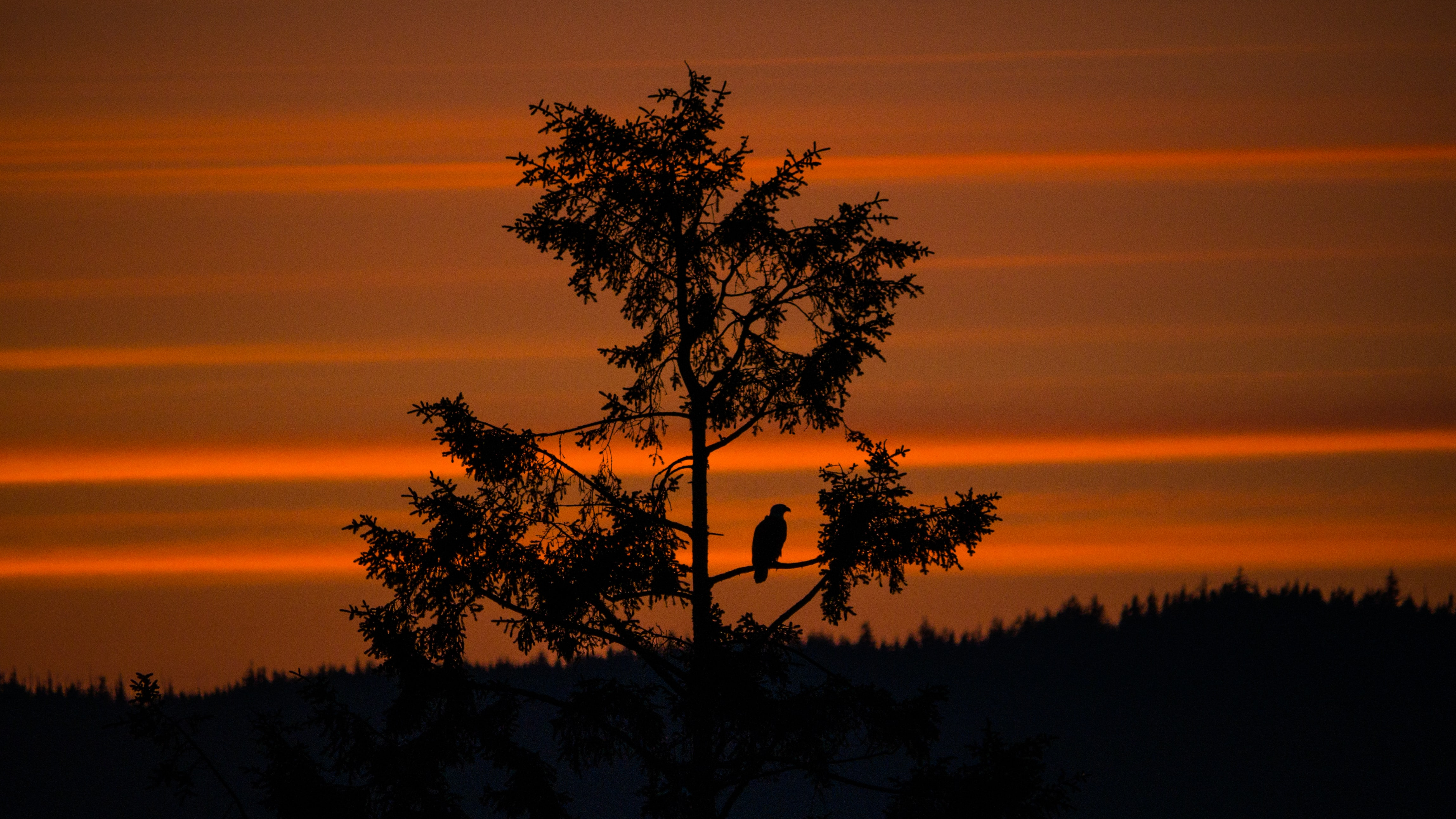 A silhouette of a bird sat in a tree in front of an orange sunset sky at Hyde Creek