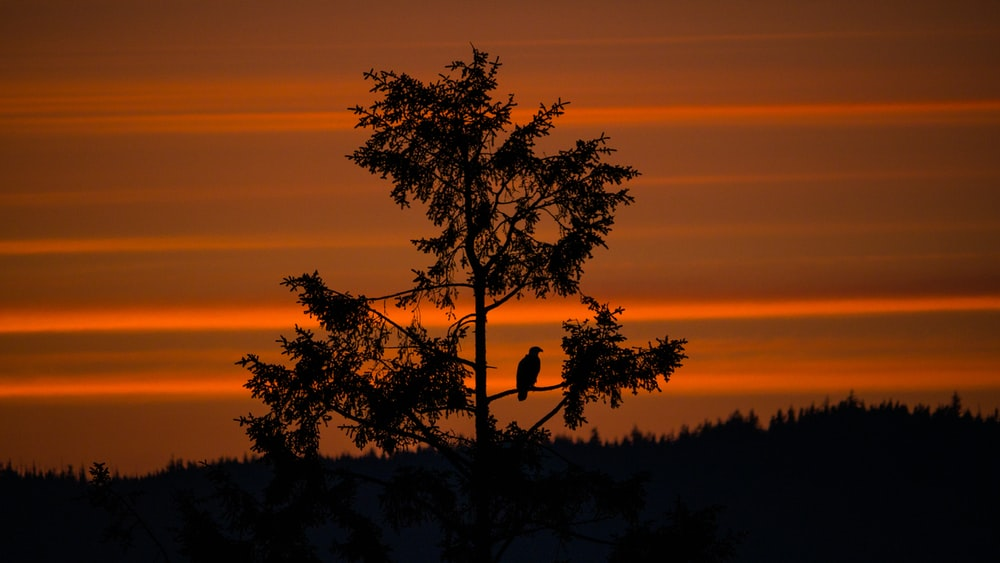 silhouette photography of bird and tree