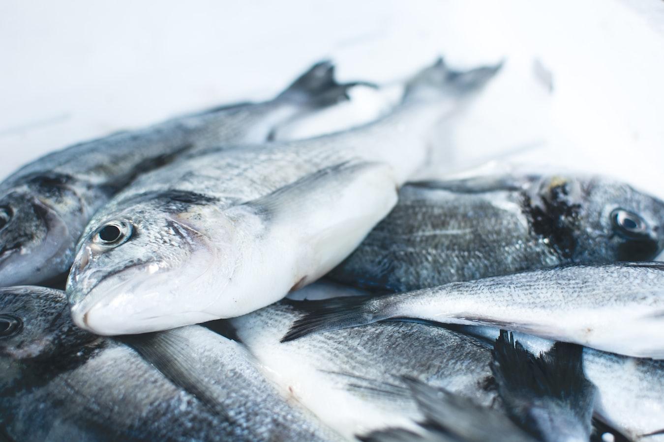 Denizde balık tükeniyor