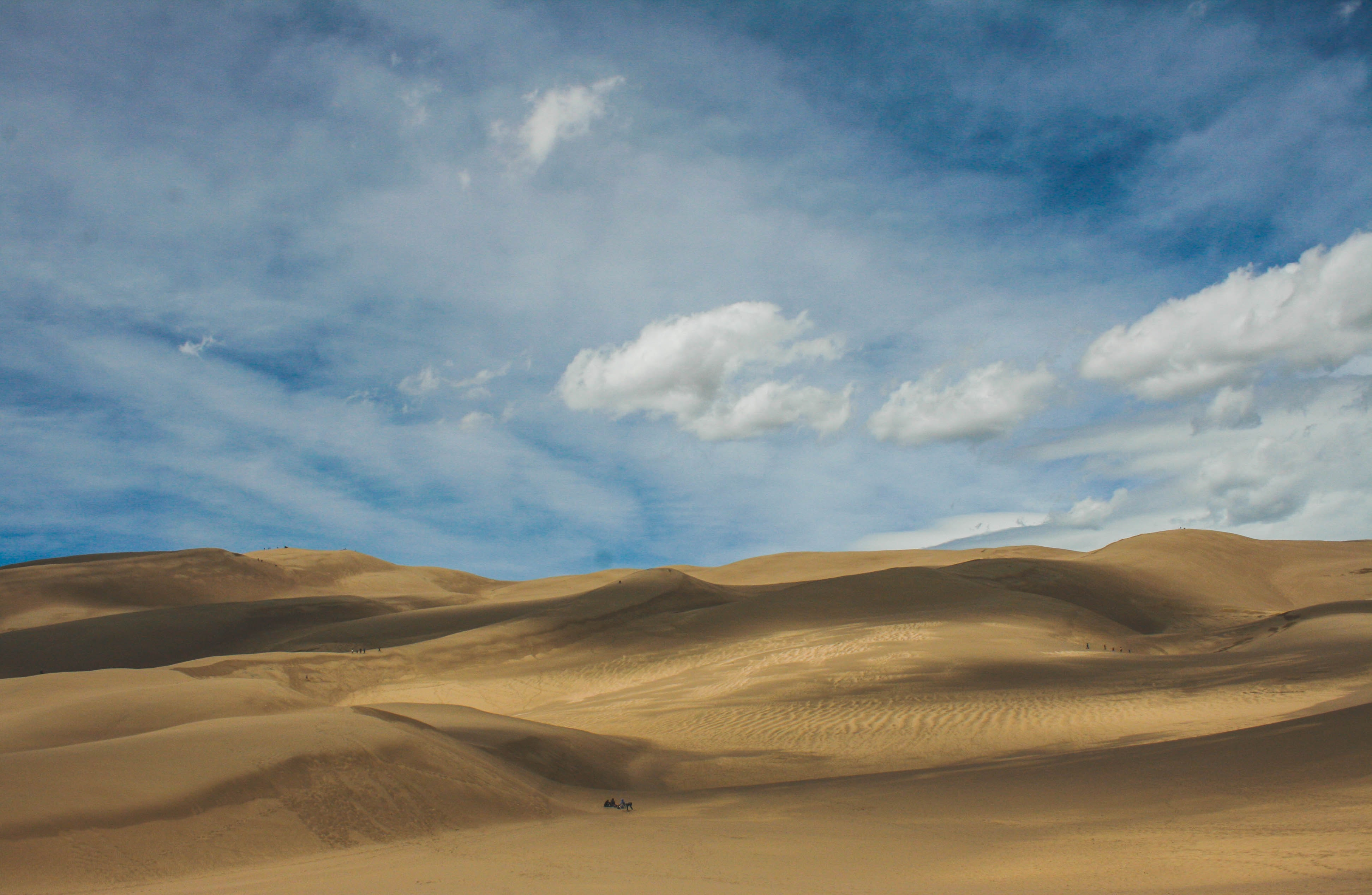 Camel walks through deserts of Great Sand Dunes National Park and Preserve