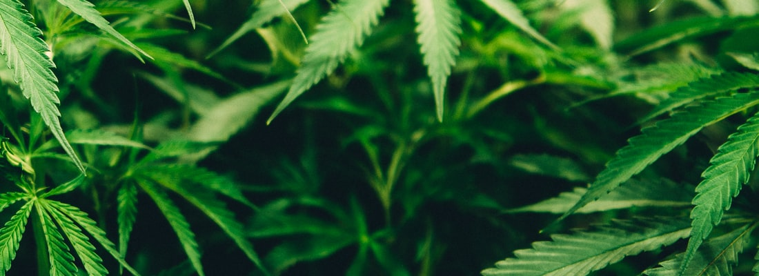 Cannabis Decision by Durham Police - Nonsensical