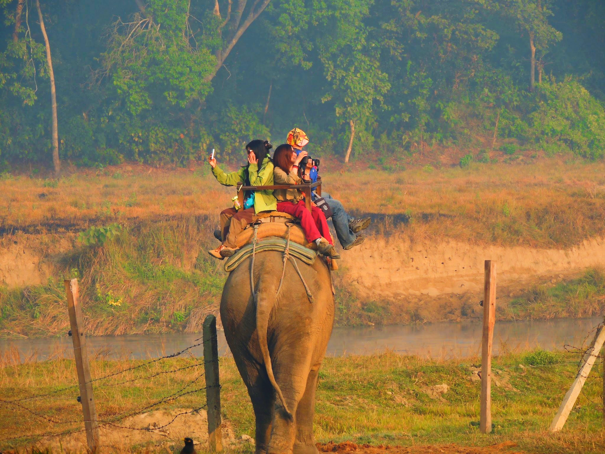 An elephant walking through a farm field while carrying tourists at Chitwan National Park