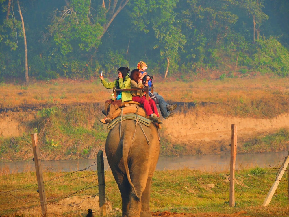 four person riding elephant during daytime