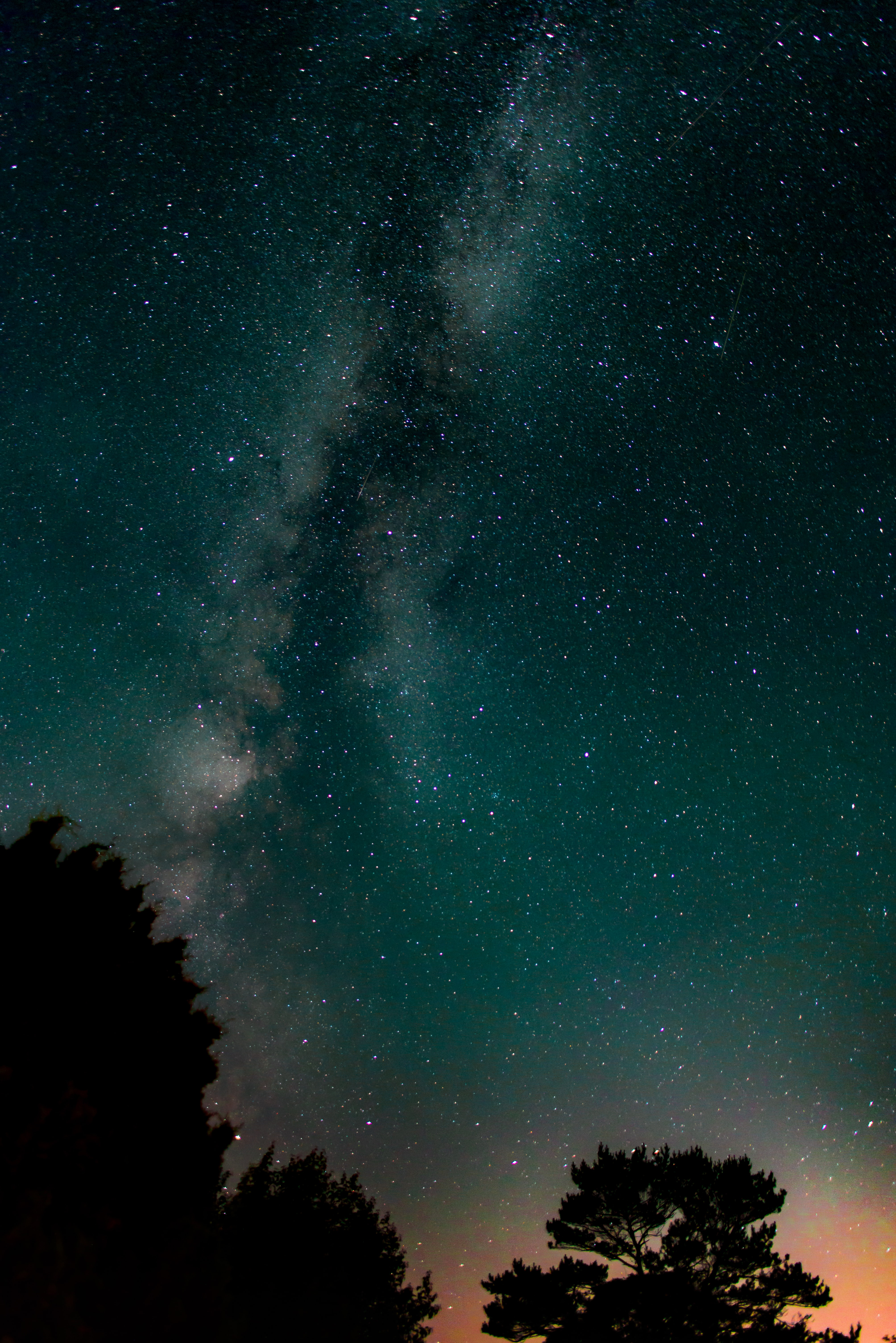 silhouette of tall trees under milkyway