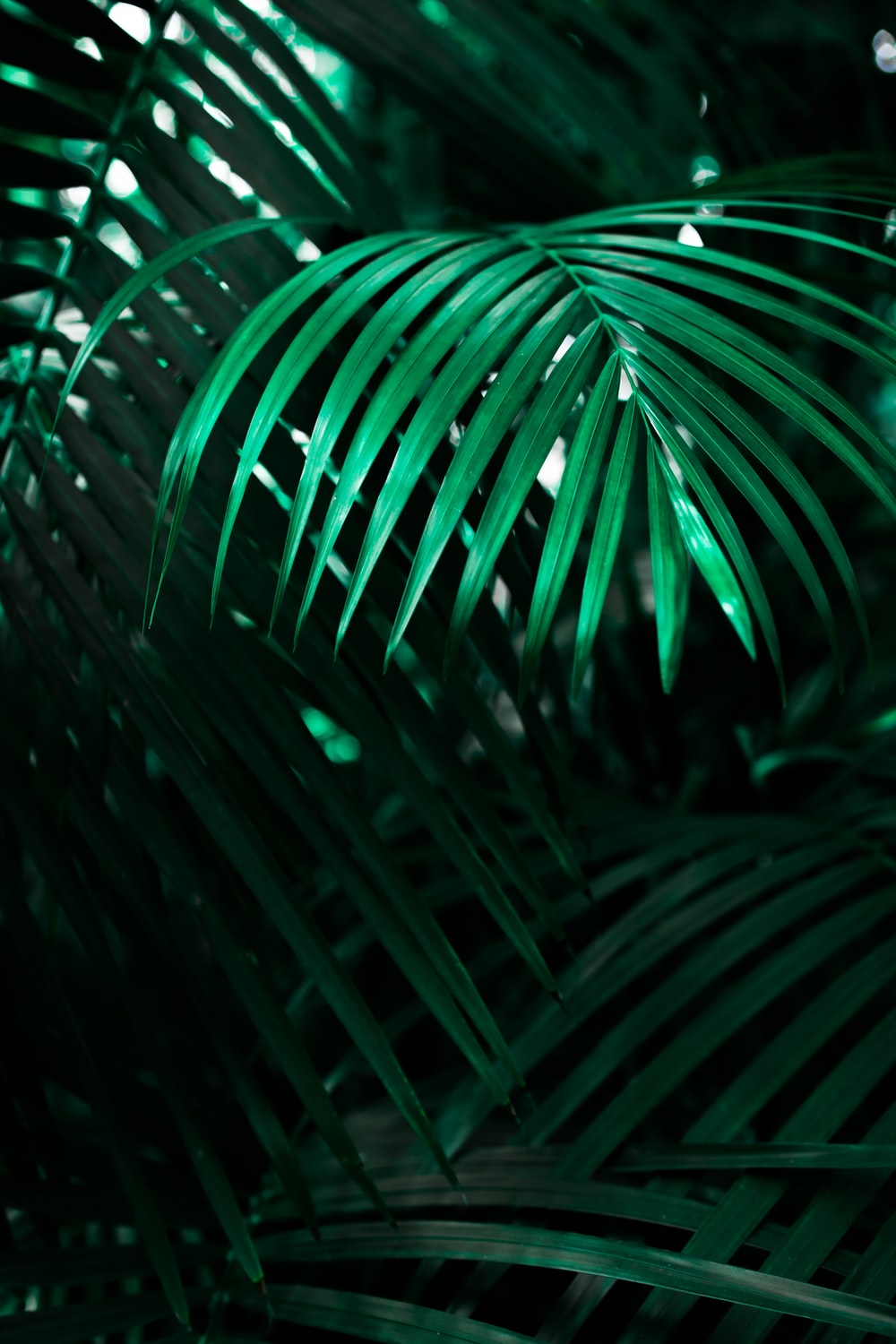green linear leafed plant
