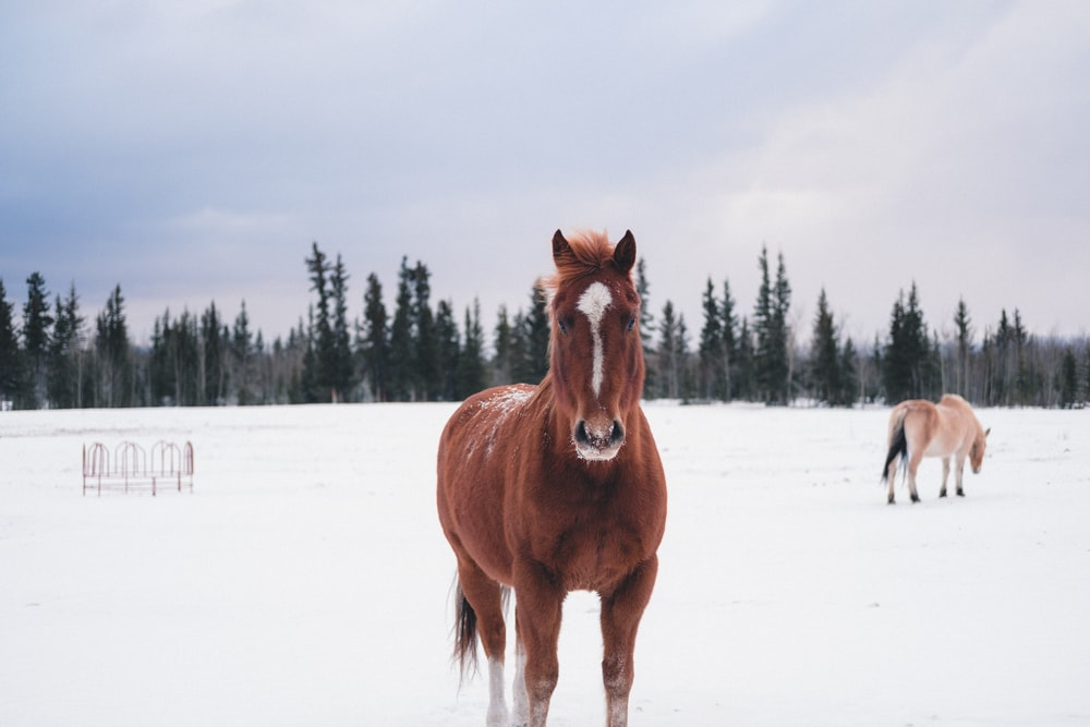 brown horse on snow field