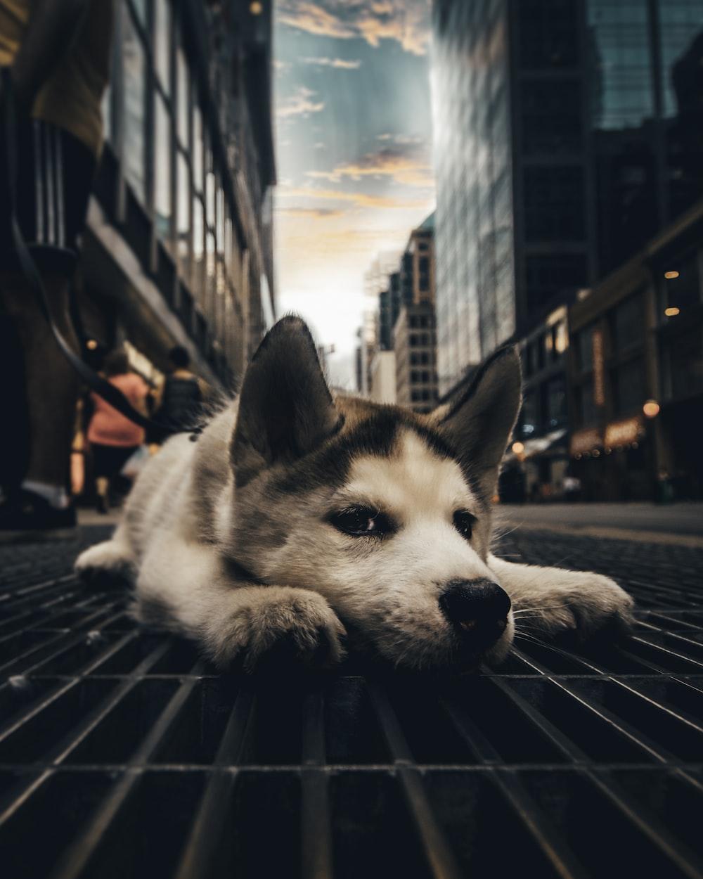 close up photography of white dog
