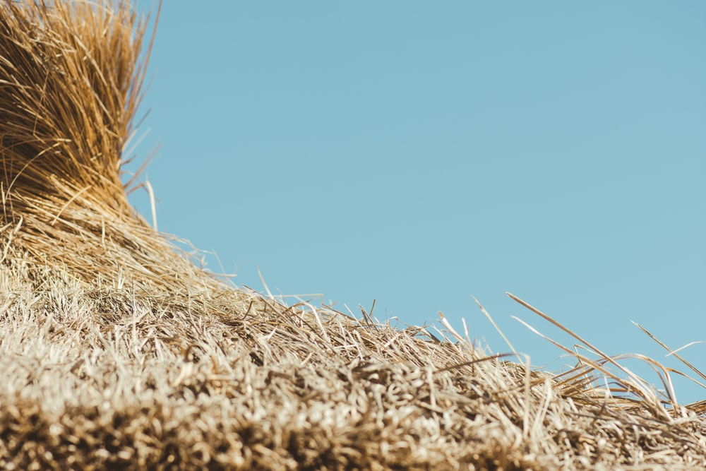 rules of third photography of brown hay