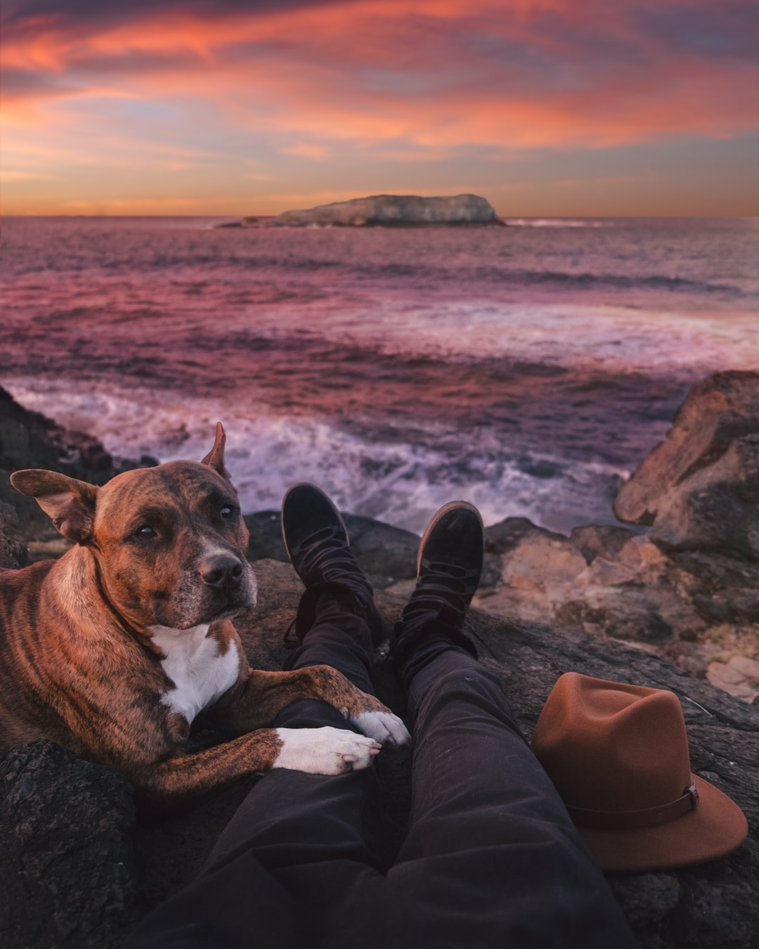 Dog and owner watching the coastal sunset