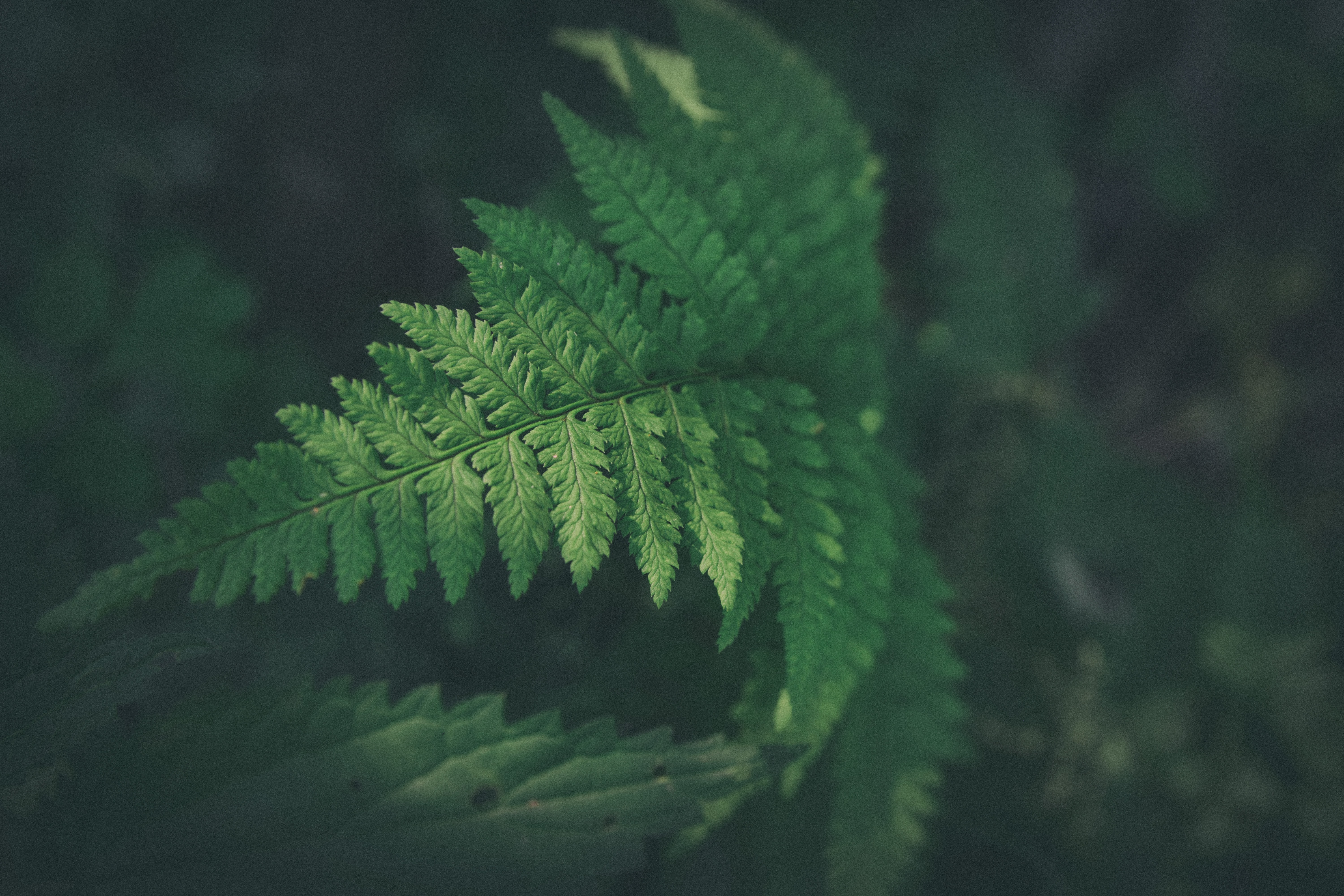 shallow focus photography of green leafed plant