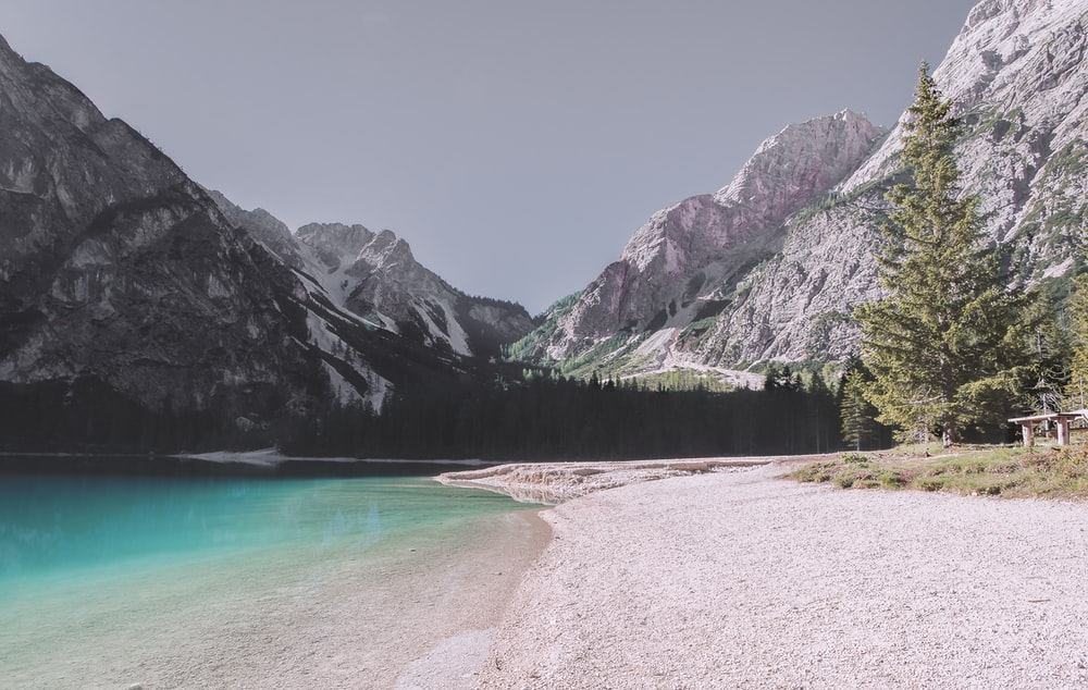 pine trees near body of water and mountains