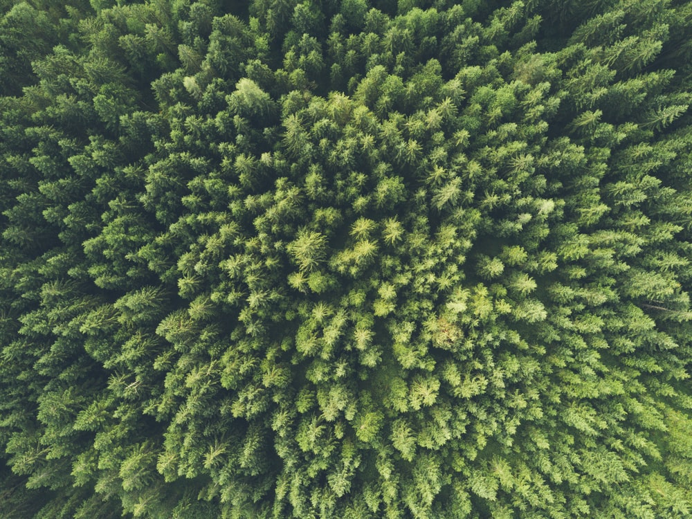 bird eye view photography of a green trees