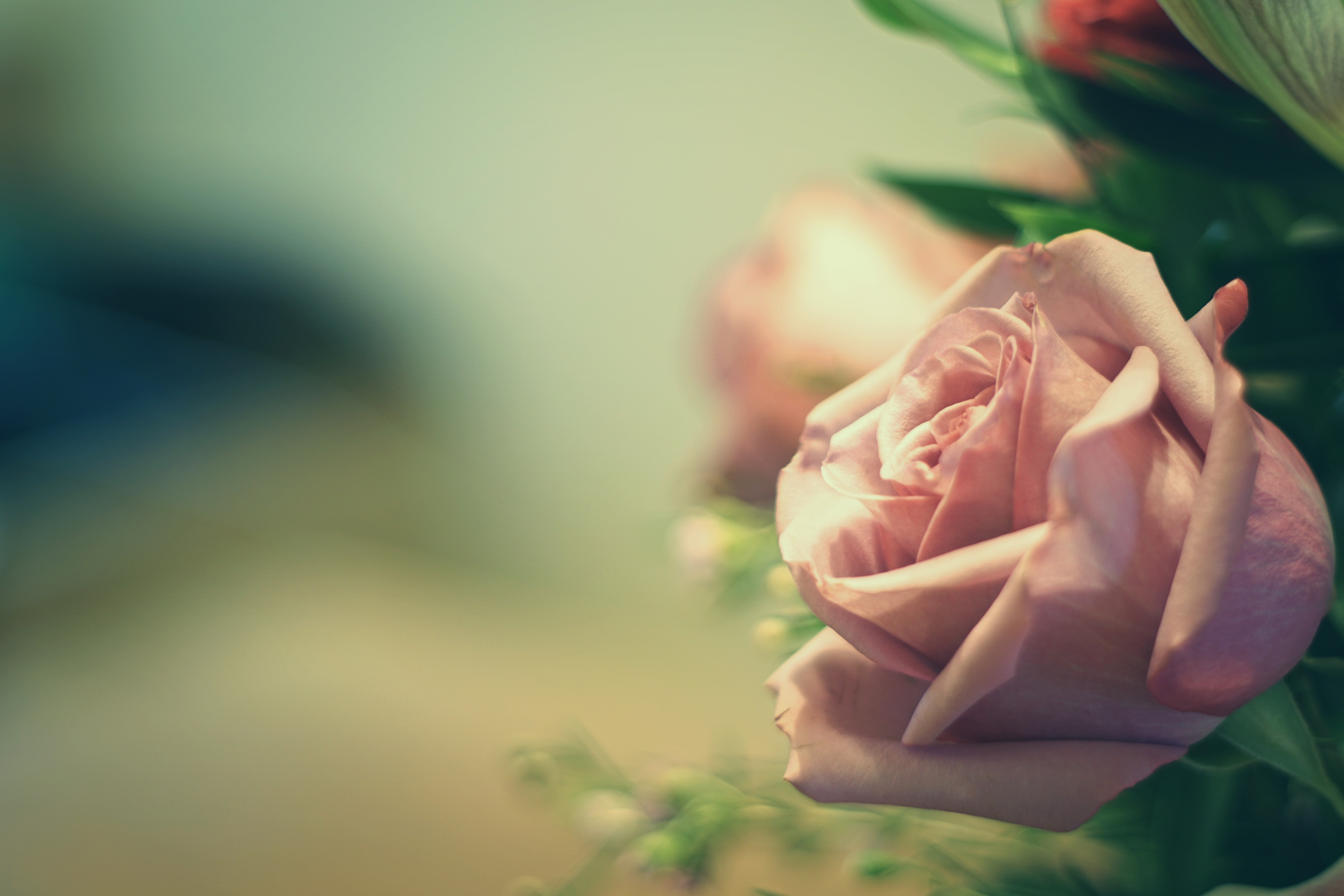 Angled close-up of a pink rose in a floral bouquet