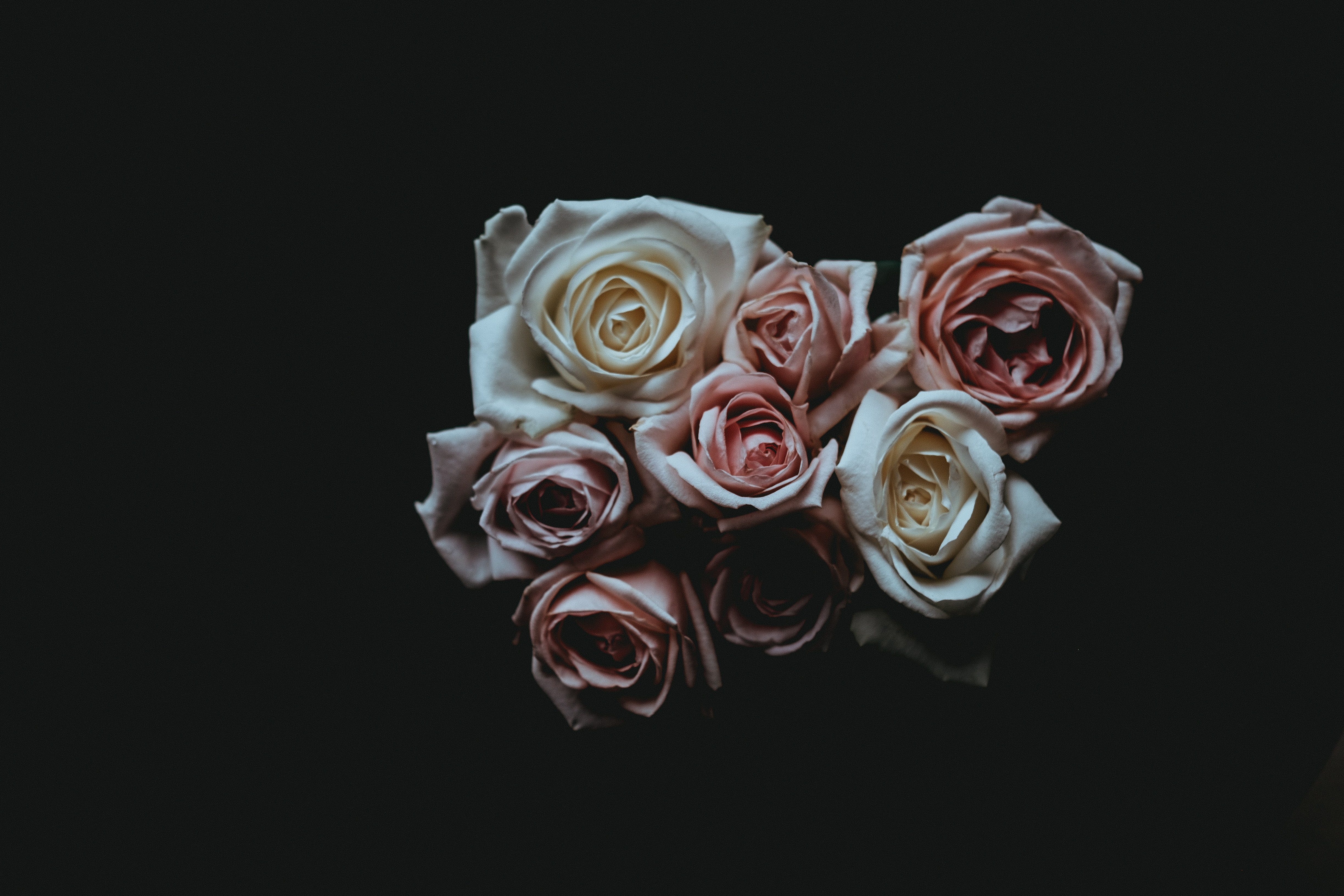 low light photography of roses