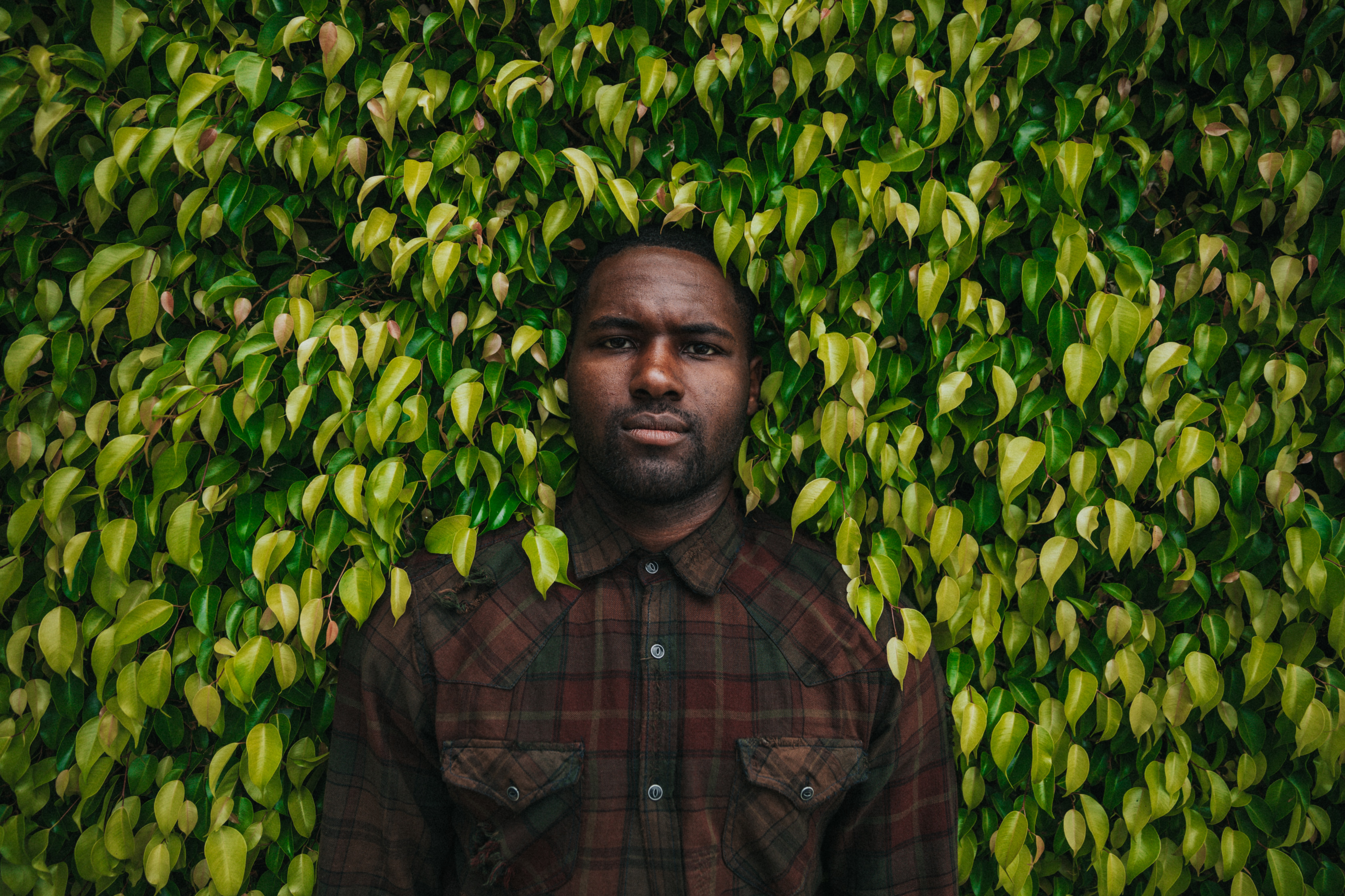 A man in a plaid shirt stands pressed against a green hedge