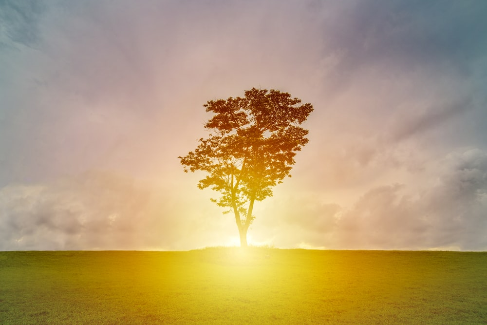 silhouette of tree on grass field with sunray under cloudy sky
