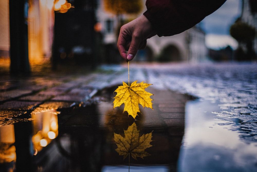 person holding yellow maple leaf over water on street