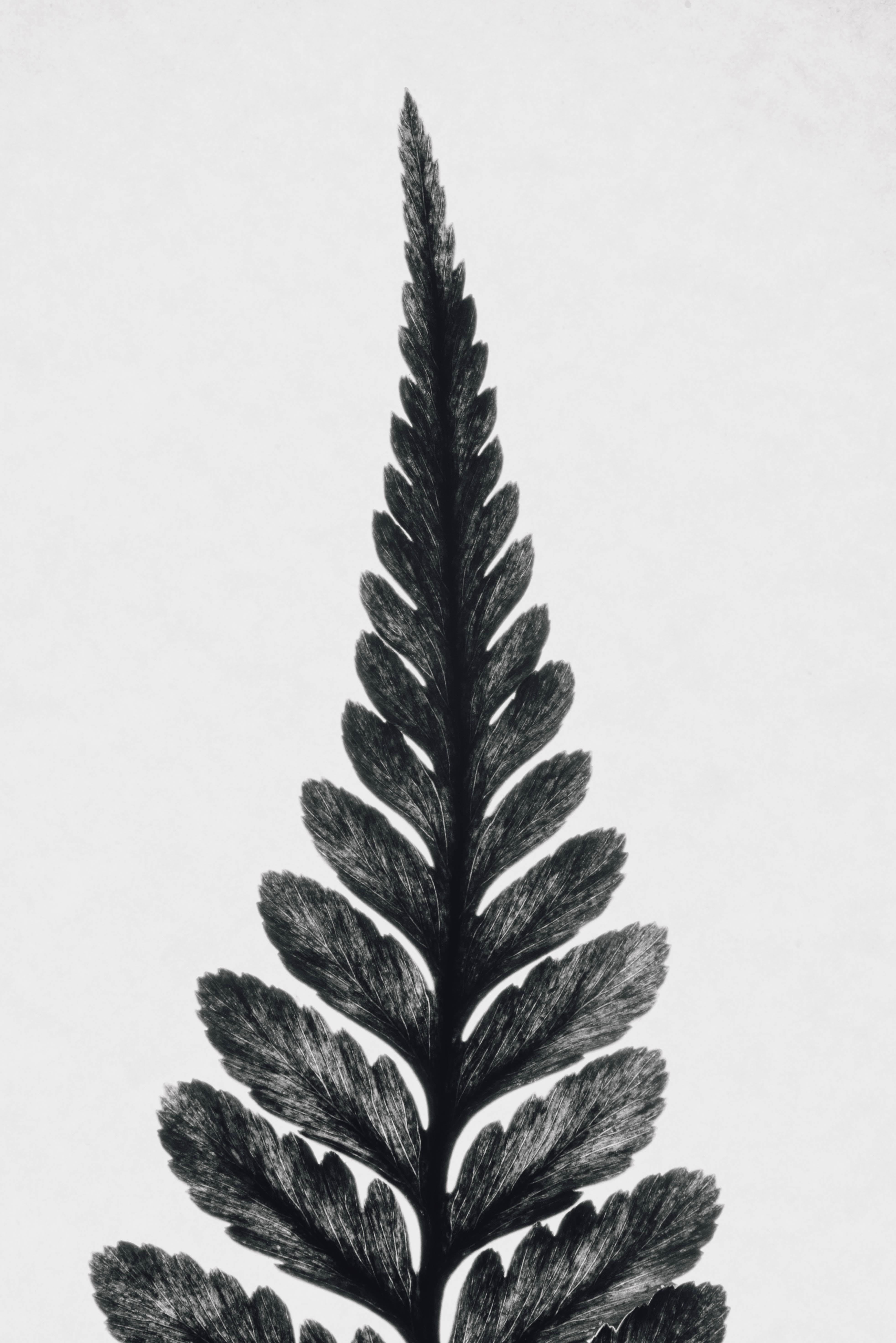 A tall leaf.