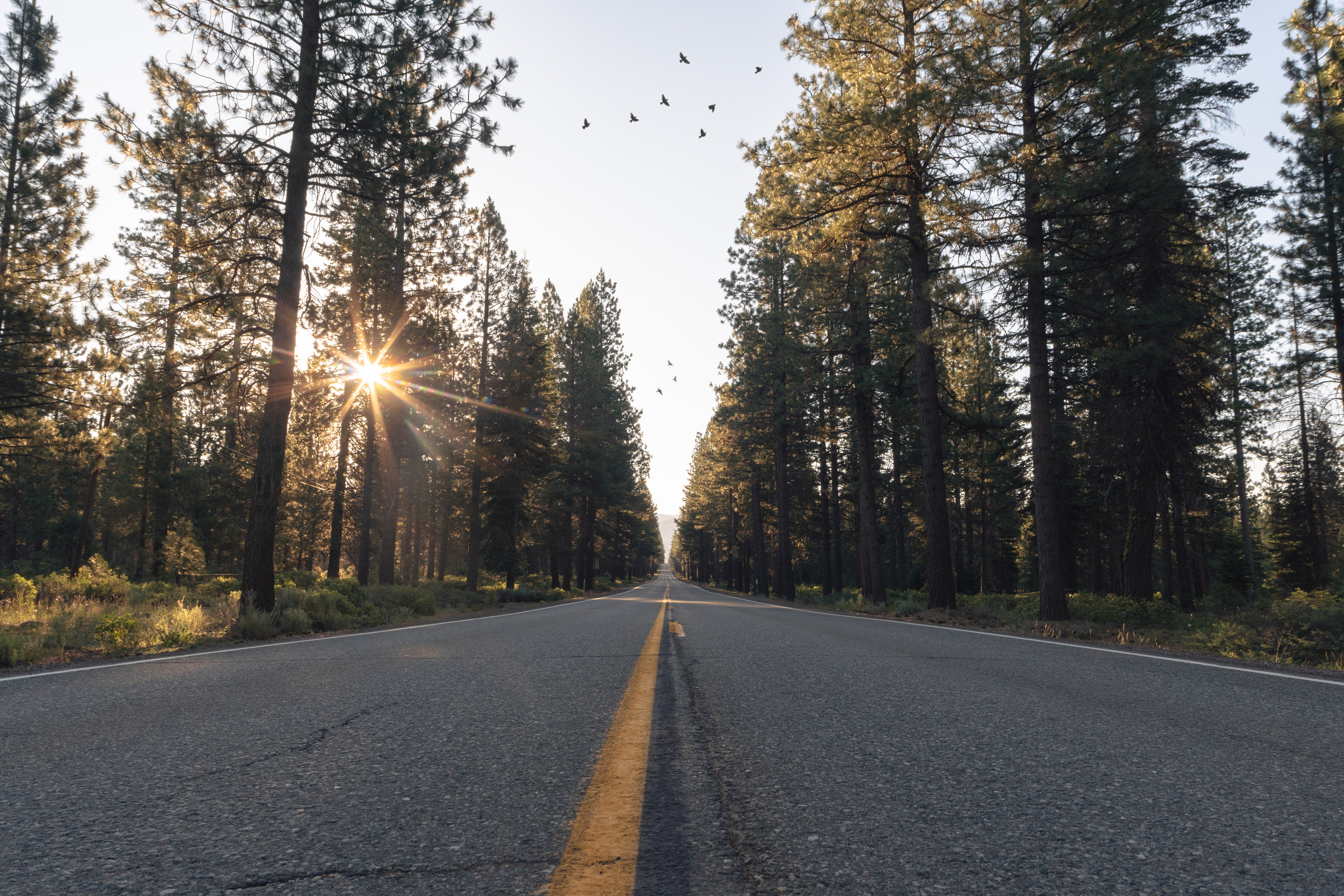 A street surrounded by tall pine trees at sunset in Lake Almanor
