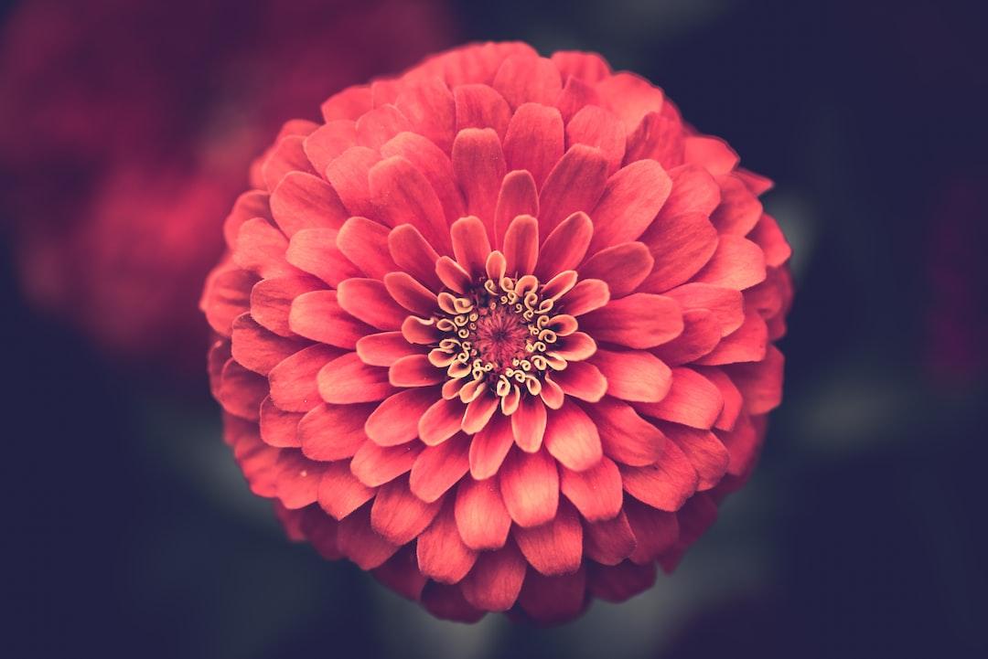 3919. Virágok
