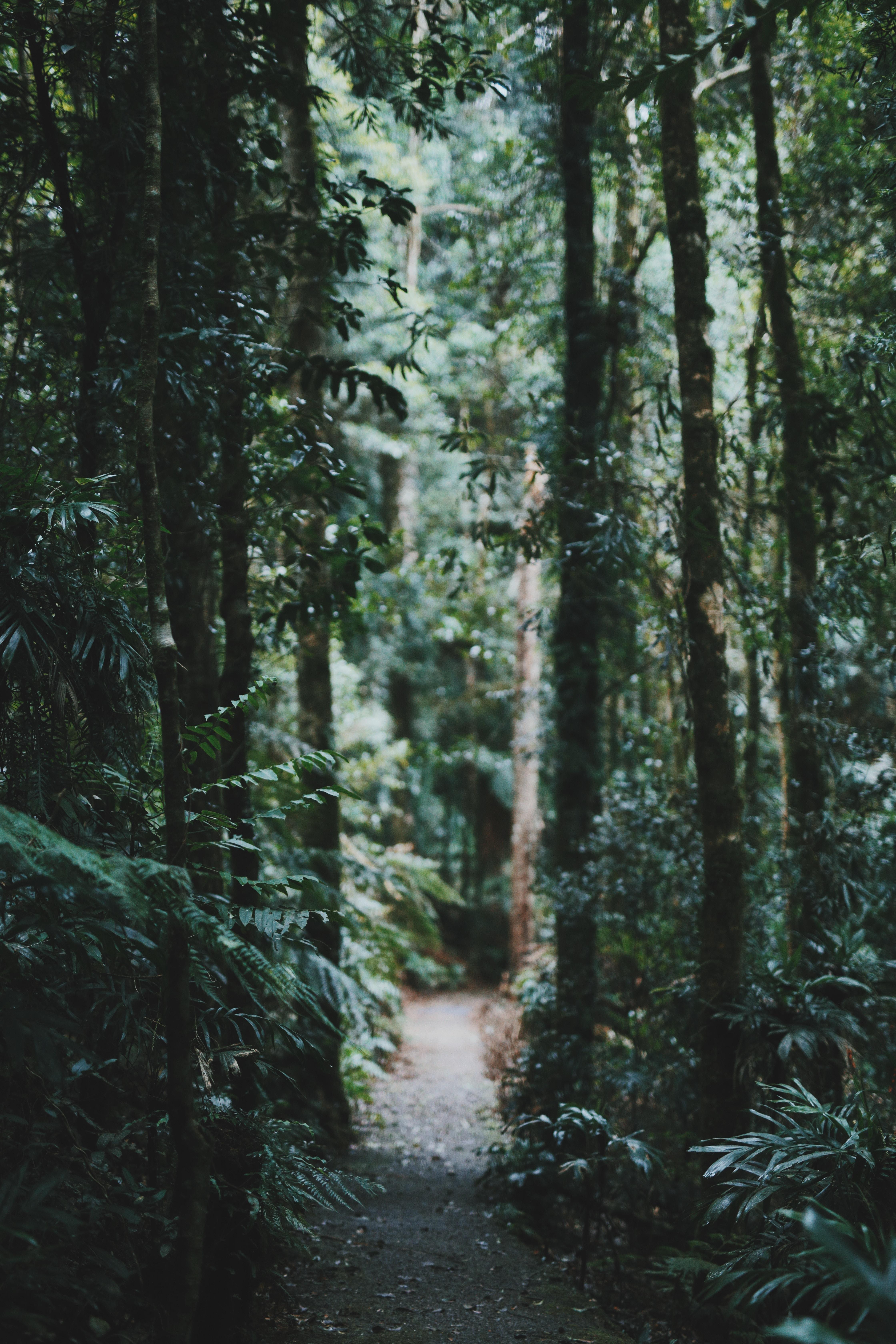 A narrow dirt path through a green forest in Bellingen