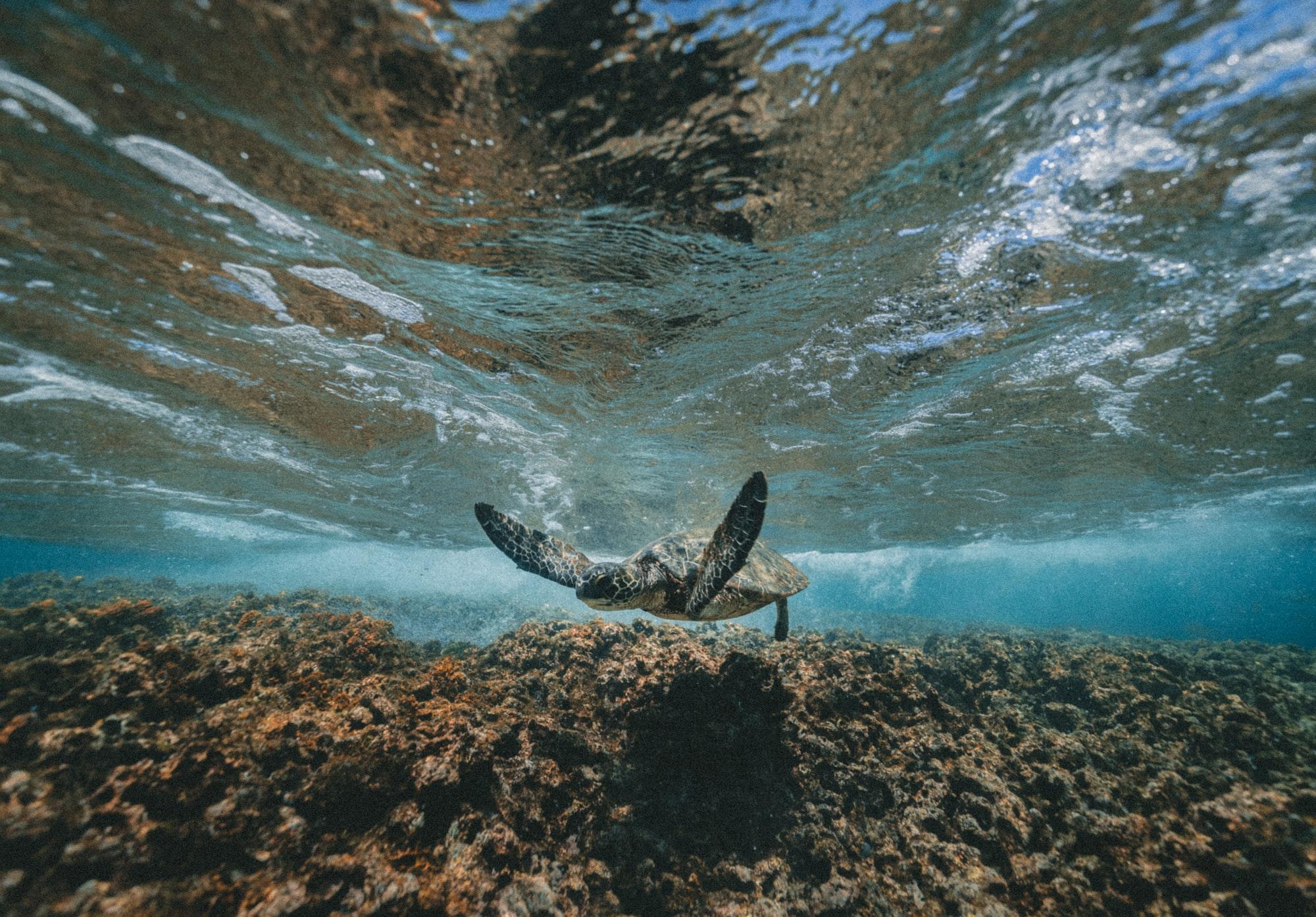 Можно сфотографировать подводный мир