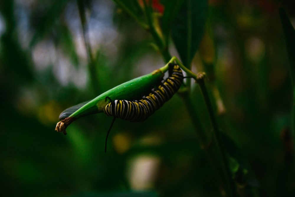 macro photography of yellow and black caterpilar on green plant