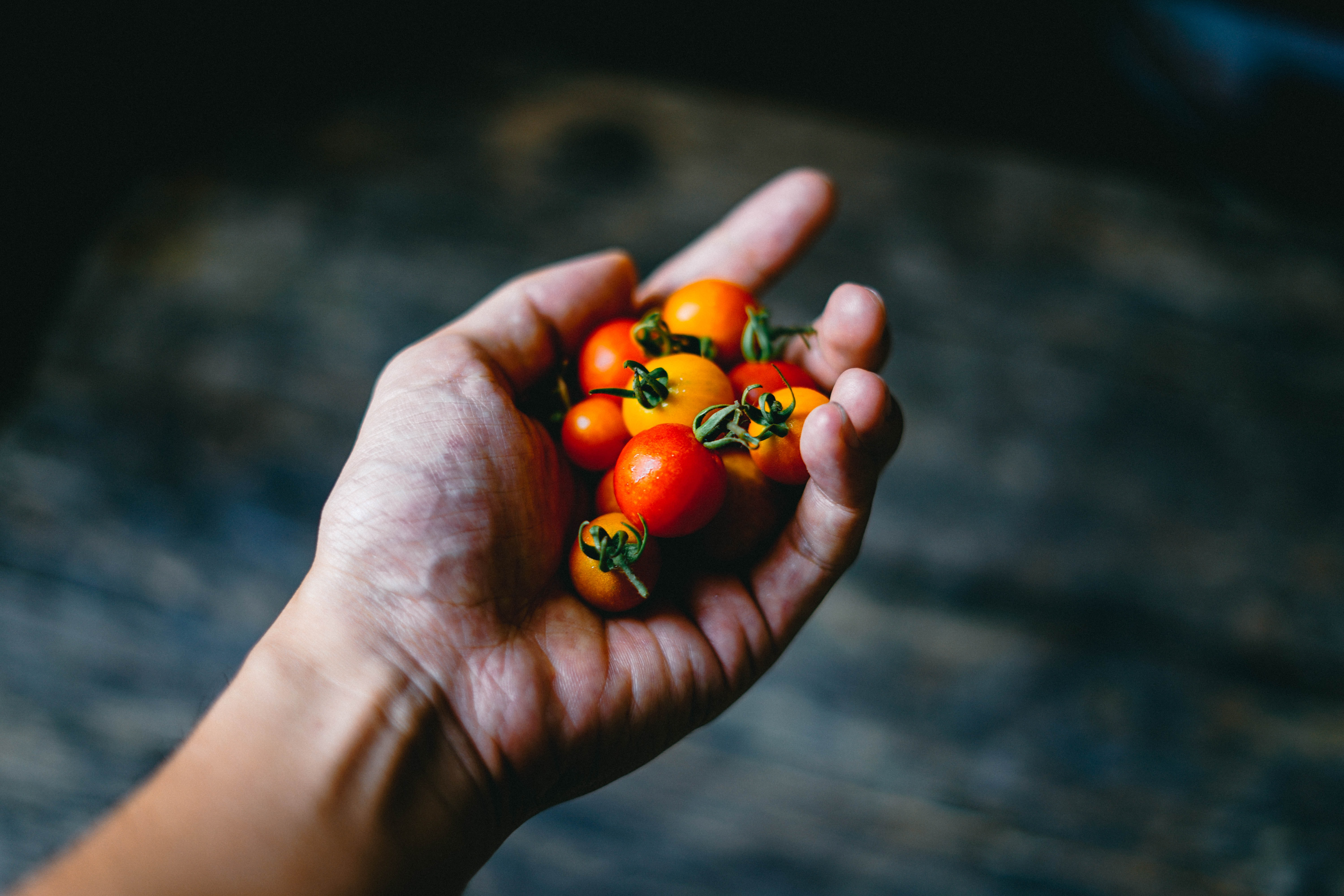person holding cherry tomatoes