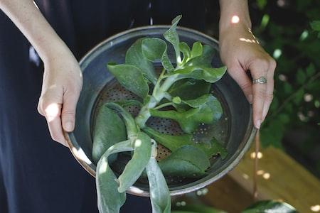 Start Fresh with Organic Gardening
